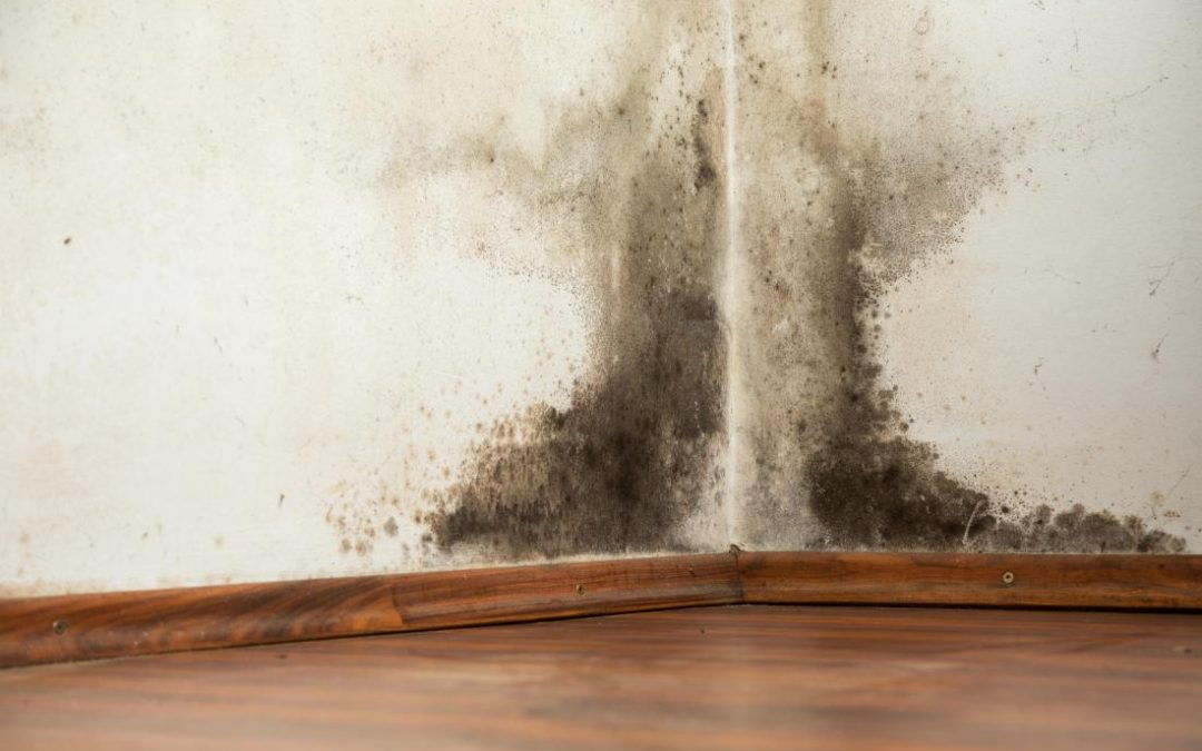 How to Remove Black Mold Safely