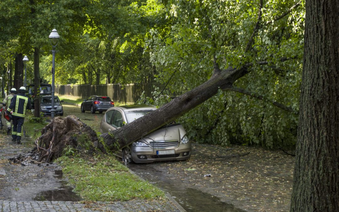 Protect your Land From Fallen Trees During the Fall