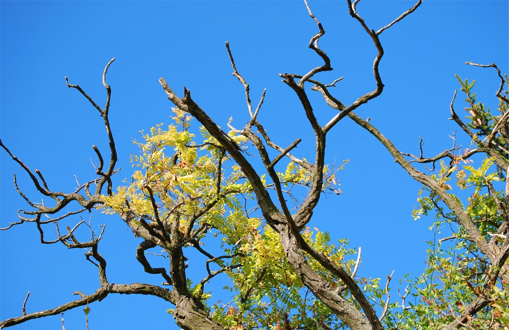 How to Tell if a Tree is Dead to Protect your Home and Property.