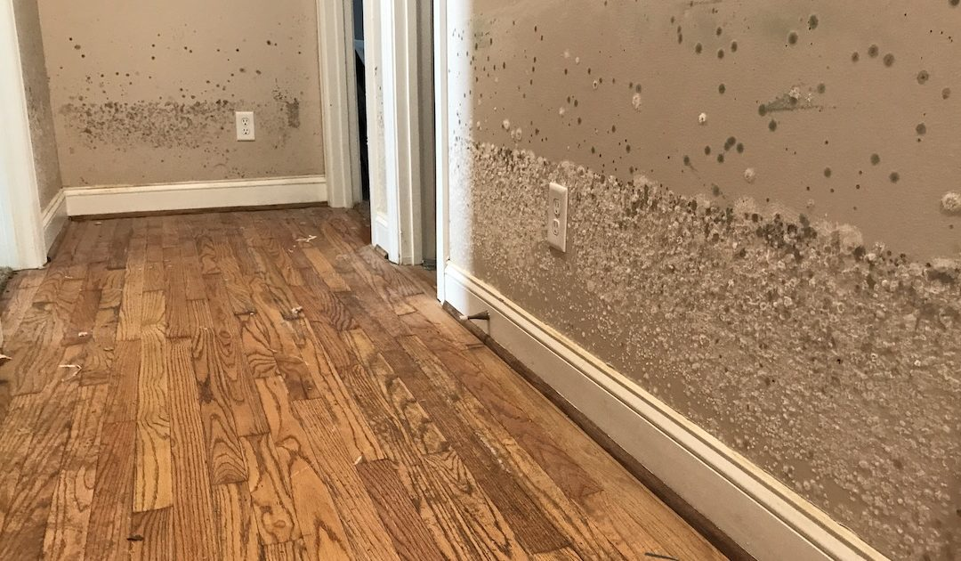 4 Easy Ways to Flood-Proof Your Home